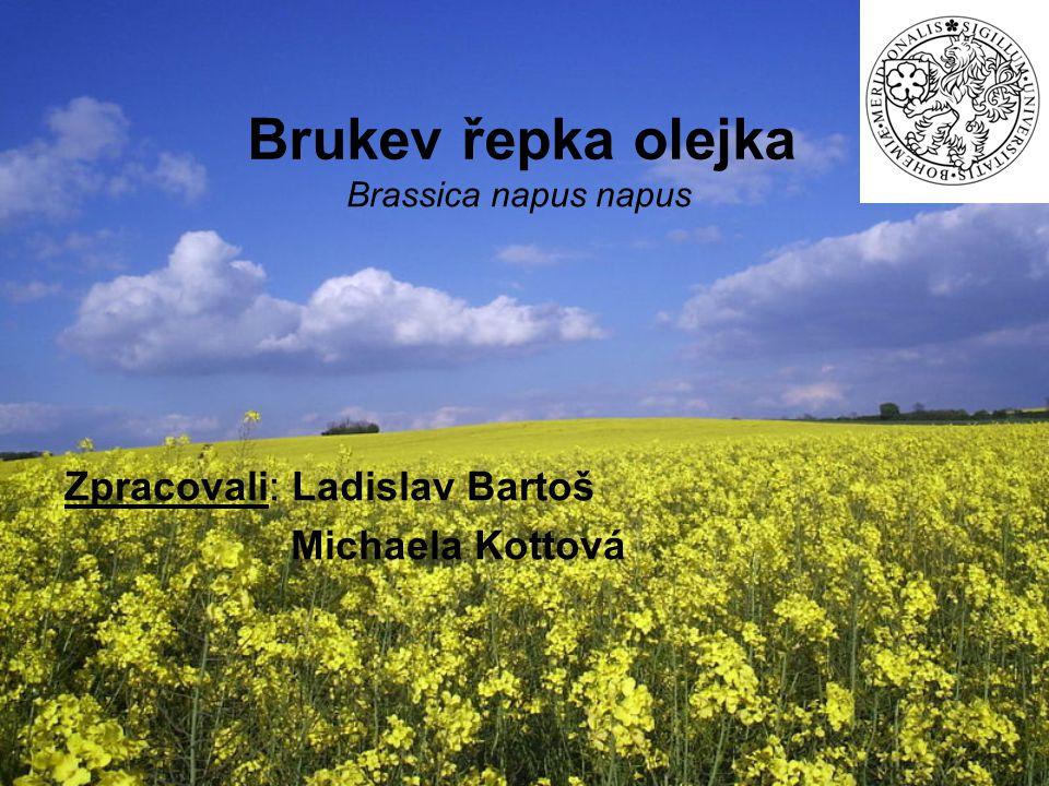 Brukev řepka olejka Brassica napus napus Zpracovali: Ladislav Bartoš Michaela Kottová