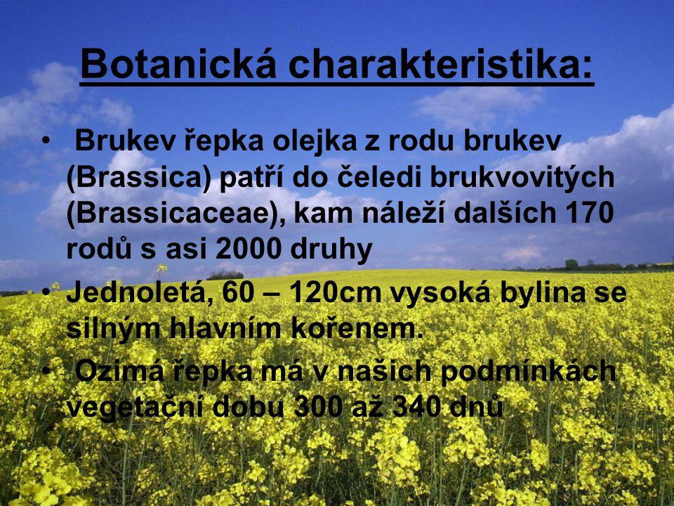 Botanická charakteristika: Brukev řepka olejka z rodu brukev (Brassica) patří do čeledi brukvovitých (Brassicaceae), kam náleží dalších 170 rodů s asi 2000 druhy Jednoletá, 60 – 120cm vysoká bylina se silným hlavním kořenem.
