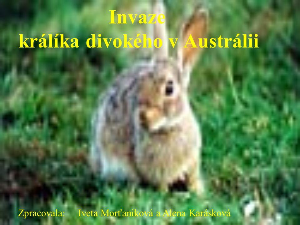 Invaze králíka divokého v Austrálii Zpracovala: Iveta Morťaniková a Alena Karásková
