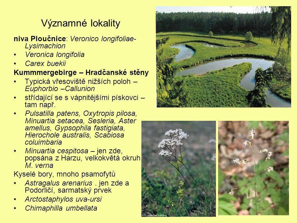 Významné lokality niva Ploučnice: Veronico longifoliae- Lysimachion Veronica longifolia Carex buekii Kummmergebirge – Hradčanské stěny Typická vřesoviště nižších poloh – Euphorbio –Callunion střídající se s vápnitějšími pískovci – tam např.