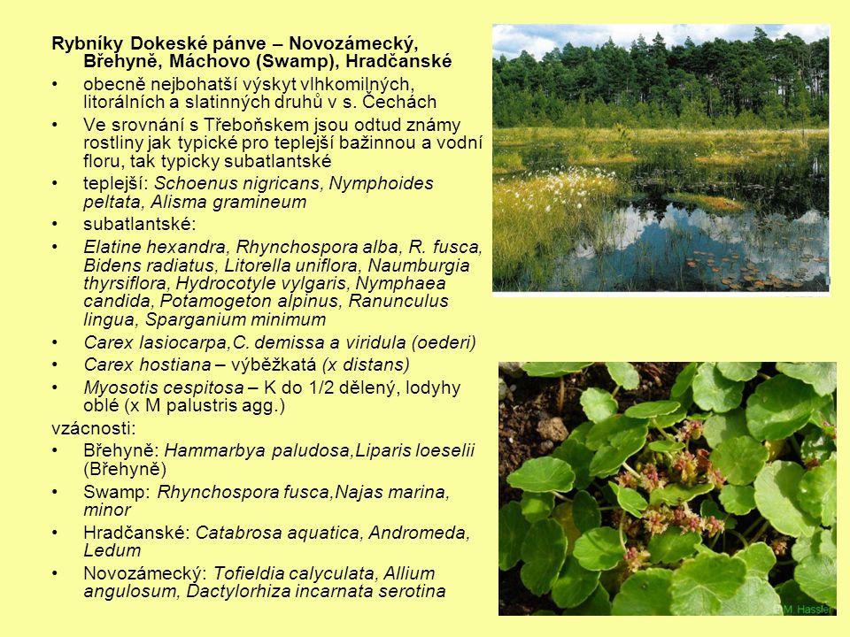 Rybníky Dokeské pánve – Novozámecký, Břehyně, Máchovo (Swamp), Hradčanské obecně nejbohatší výskyt vlhkomilných, litorálních a slatinných druhů v s. Č