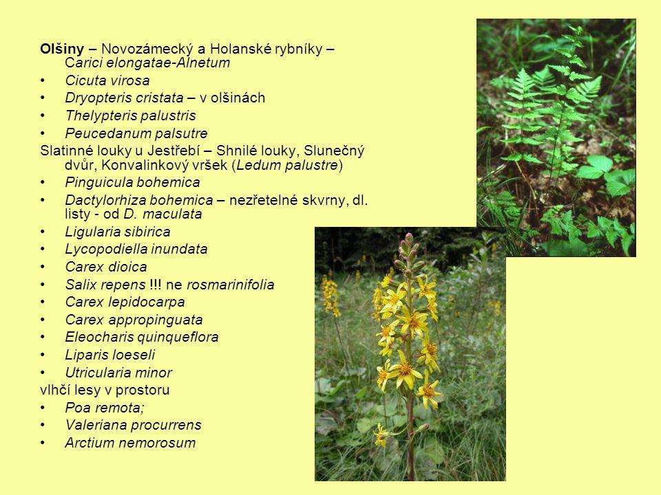 Olšiny – Novozámecký a Holanské rybníky – Carici elongatae-Alnetum Cicuta virosa Dryopteris cristata – v olšinách Thelypteris palustris Peucedanum pal
