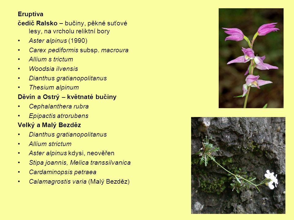 Eruptiva čedič Ralsko – bučiny, pěkné suťové lesy, na vrcholu reliktní bory Aster alpinus (1990) Carex pediformis subsp.