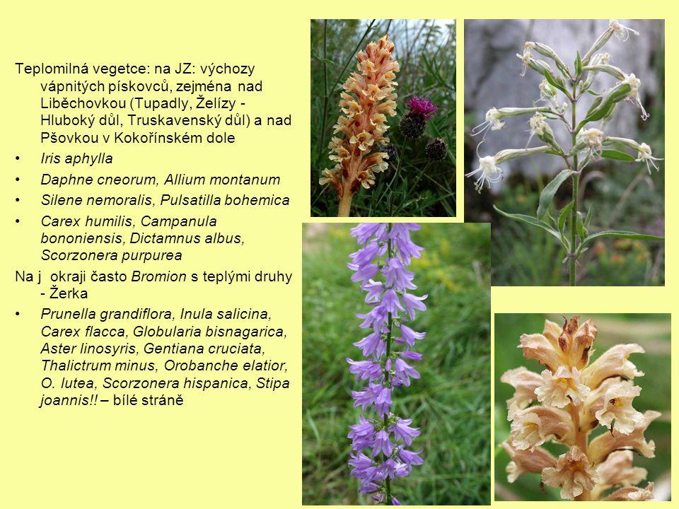 Teplomilná vegetce: na JZ: výchozy vápnitých pískovců, zejména nad Liběchovkou (Tupadly, Želízy - Hluboký důl, Truskavenský důl) a nad Pšovkou v Kokořínském dole Iris aphylla Daphne cneorum, Allium montanum Silene nemoralis, Pulsatilla bohemica Carex humilis, Campanula bononiensis, Dictamnus albus, Scorzonera purpurea Na j okraji často Bromion s teplými druhy - Žerka Prunella grandiflora, Inula salicina, Carex flacca, Globularia bisnagarica, Aster linosyris, Gentiana cruciata, Thalictrum minus, Orobanche elatior, O.