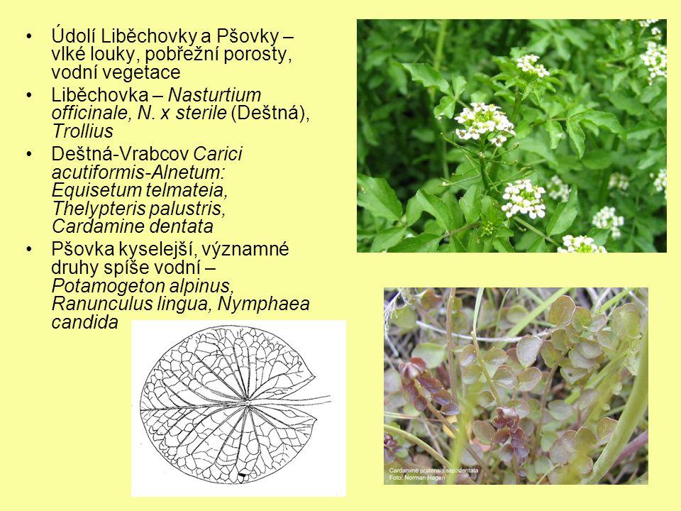 Údolí Liběchovky a Pšovky – vlké louky, pobřežní porosty, vodní vegetace Liběchovka – Nasturtium officinale, N. x sterile (Deštná), Trollius Deštná-Vr