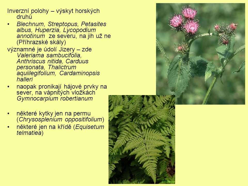 Inverzní polohy – výskyt horských druhů Blechnum, Streptopus, Petasites albus, Huperzia, Lycopodium annotinum ze severu, na jih už ne (Příhrazské skály) významné je údolí Jizery – zde Valeriama sambucifolia, Anthriscus nitida, Carduus personata, Thalictrum aquiilegifolium, Cardaminopsis halleri naopak pronikají hájové prvky na sever, na vápnitých vložkách Gymnocarpium robertianum některé kytky jen na permu (Chrysosplenium oppositifolium) některé jen na křídě (Equisetum telmatiea)