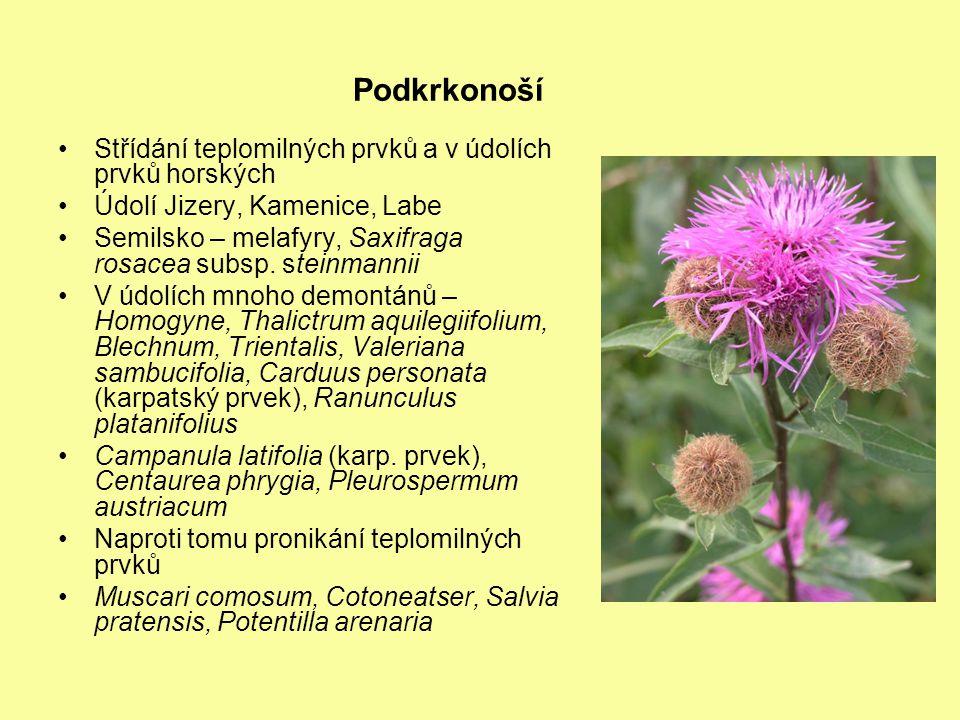 Podkrkonoší Střídání teplomilných prvků a v údolích prvků horských Údolí Jizery, Kamenice, Labe Semilsko – melafyry, Saxifraga rosacea subsp.