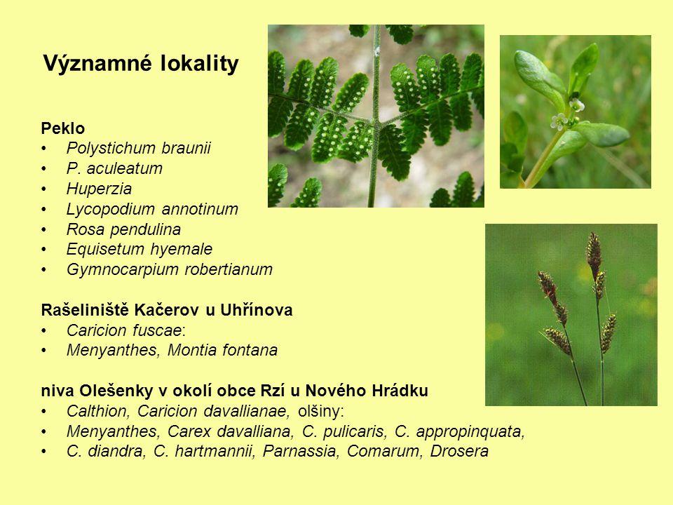 Významné lokality Peklo Polystichum braunii P. aculeatum Huperzia Lycopodium annotinum Rosa pendulina Equisetum hyemale Gymnocarpium robertianum Rašel