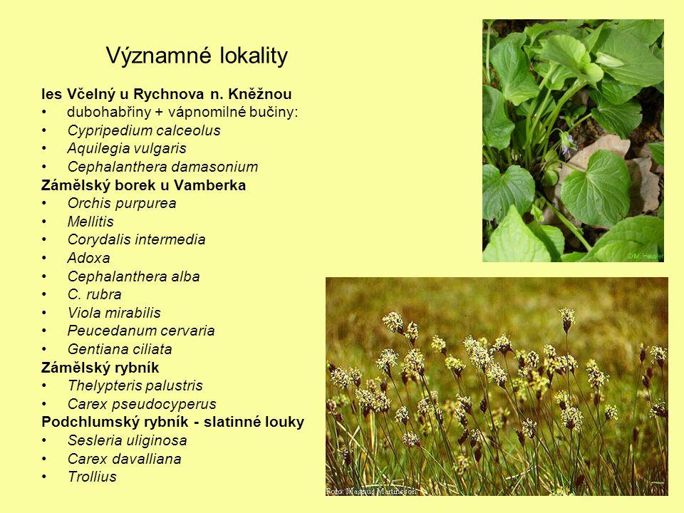 Významné lokality les Včelný u Rychnova n. Kněžnou dubohabřiny + vápnomilné bučiny: Cypripedium calceolus Aquilegia vulgaris Cephalanthera damasonium