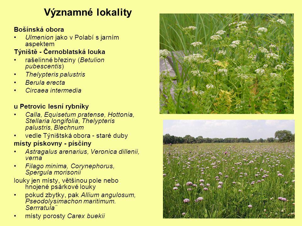 Významné lokality Bošínská obora Ulmenion jako v Polabí s jarním aspektem Týniště - Černoblatská louka rašelinné březiny (Betulion pubescentis) Thelyp