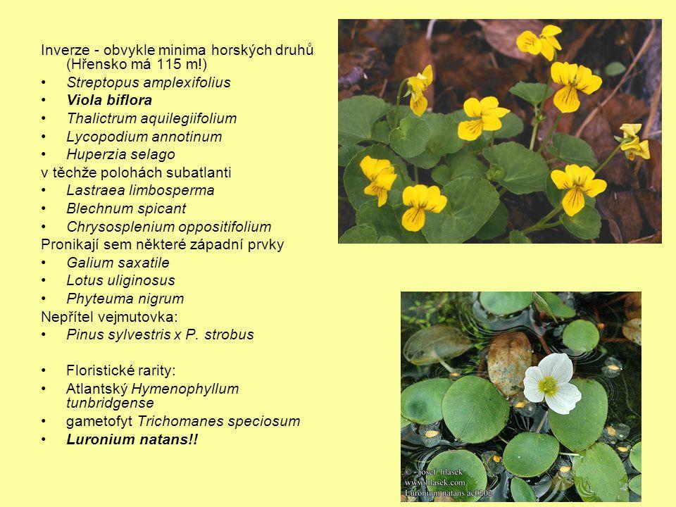 Inverze - obvykle minima horských druhů (Hřensko má 115 m!) Streptopus amplexifolius Viola biflora Thalictrum aquilegiifolium Lycopodium annotinum Hup