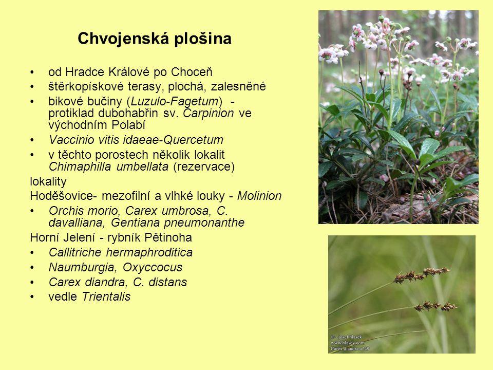 Chvojenská plošina od Hradce Králové po Choceň štěrkopískové terasy, plochá, zalesněné bikové bučiny (Luzulo-Fagetum) - protiklad dubohabřin sv. Carpi
