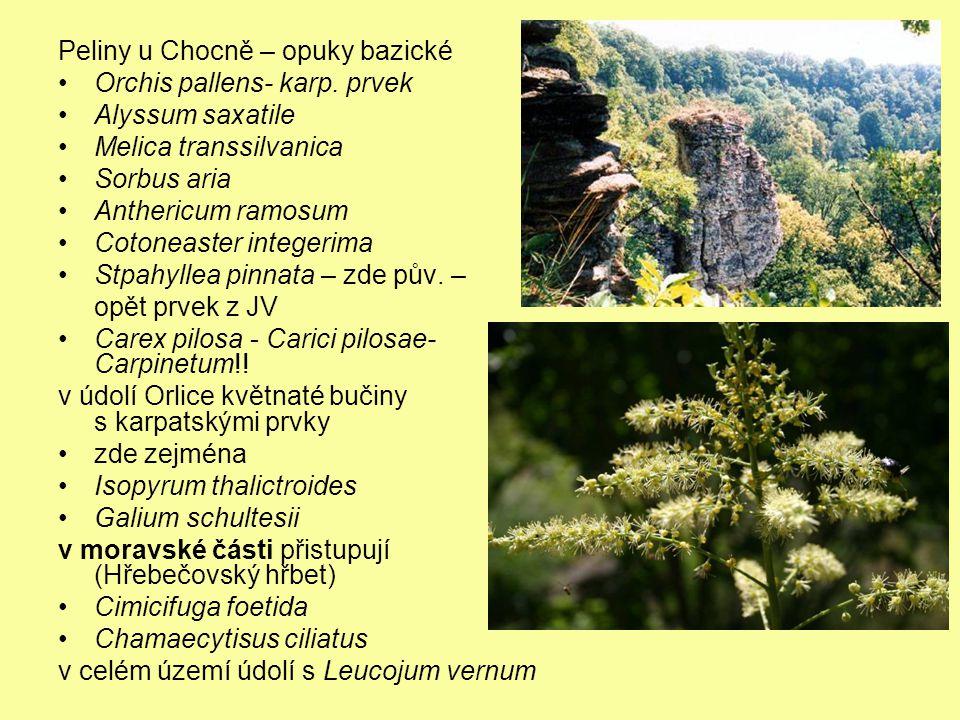 Peliny u Chocně – opuky bazické Orchis pallens- karp. prvek Alyssum saxatile Melica transsilvanica Sorbus aria Anthericum ramosum Cotoneaster integeri
