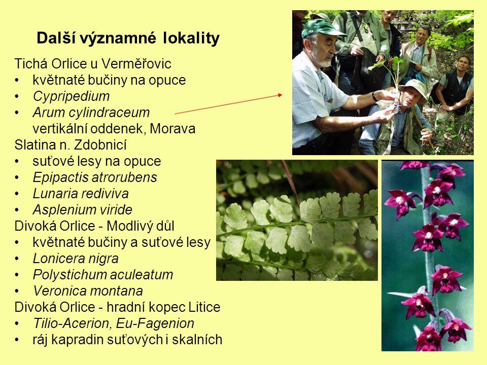 Další významné lokality Tichá Orlice u Verměřovic květnaté bučiny na opuce Cypripedium Arum cylindraceum vertikální oddenek, Morava Slatina n.