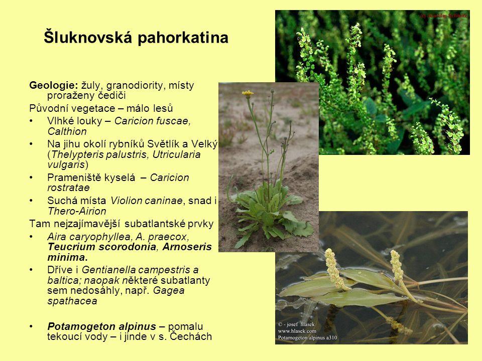 Rybníky Dokeské pánve – Novozámecký, Břehyně, Máchovo (Swamp), Hradčanské obecně nejbohatší výskyt vlhkomilných, litorálních a slatinných druhů v s.