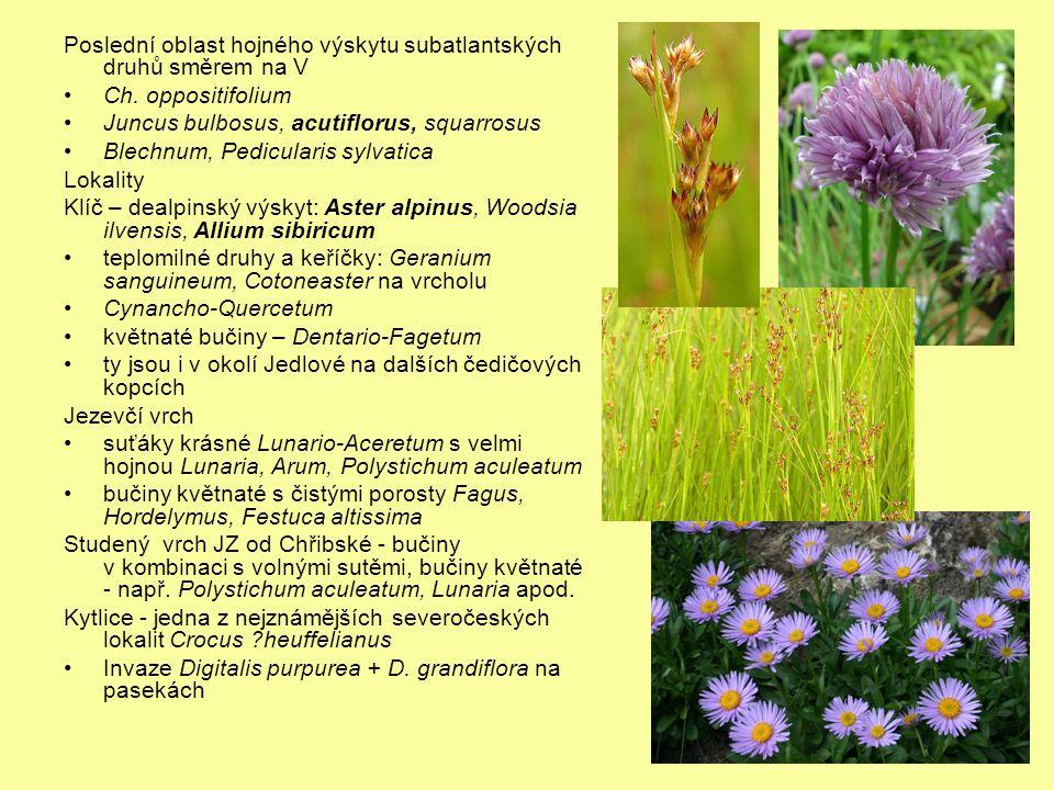Poslední oblast hojného výskytu subatlantských druhů směrem na V Ch. oppositifolium Juncus bulbosus, acutiflorus, squarrosus Blechnum, Pedicularis syl