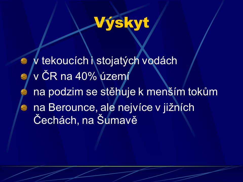 Výskyt v tekoucích i stojatých vodách v ČR na 40% území na podzim se stěhuje k menším tokům na Berounce, ale nejvíce v jižních Čechách, na Šumavě