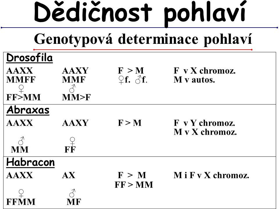 Habracon AAXX AXF > M M i F v X chromoz. ♀ ♂ FFMM MF Genotypová determinace pohlaví Dědičnost pohlaví Drosofila AAXX AAXYF > M F v X chromoz. MMFFMMF♀