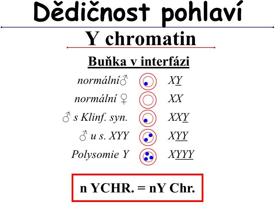 Y chromatin Dědičnost pohlaví normální♂ normální ♀ ♂ s Klinf. syn. ♂ u s. XYY Polysomie Y XY XX XXY XYY XYYY n YCHR. = nY Chr. Buňka v interfázi