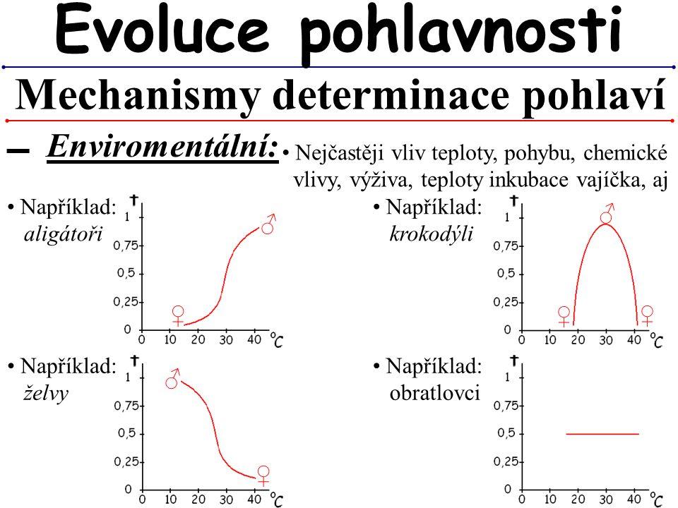 Mechanismy determinace pohlaví Evoluce pohlavnosti ▬ Enviromentální: Nejčastěji vliv teploty, pohybu, chemické vlivy, výživa, teploty inkubace vajíčka