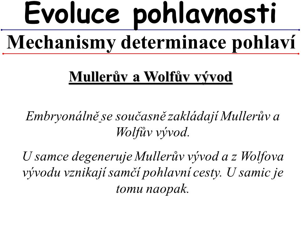 Mechanismy determinace pohlaví Evoluce pohlavnosti Embryonálně se současně zakládají Mullerův a Wolfův vývod. U samce degeneruje Mullerův vývod a z Wo