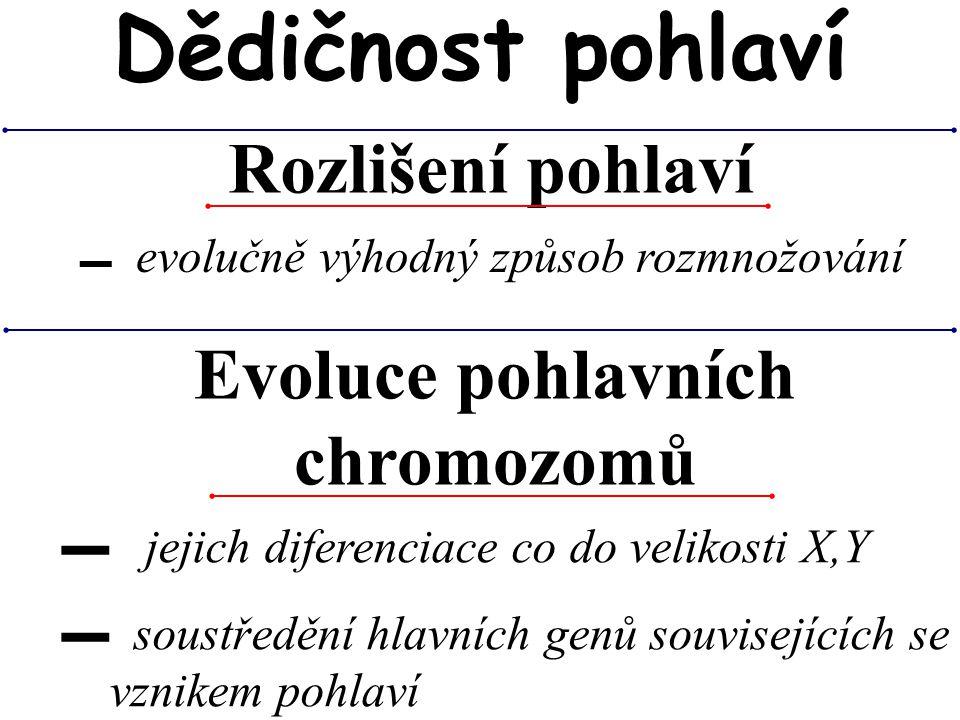 Rozlišení pohlaví Dědičnost pohlaví ▬ evolučně výhodný způsob rozmnožování Evoluce pohlavních chromozomů ▬ jejich diferenciace co do velikosti X,Y ▬ s