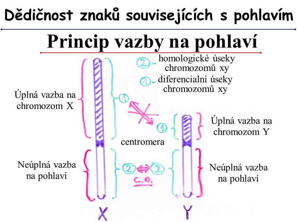 Princip vazby na pohlaví Dědičnost znaků souvisejících s pohlavím Úplná vazba na chromozom X Neúplná vazba na pohlaví Úplná vazba na chromozom Y Neúpl