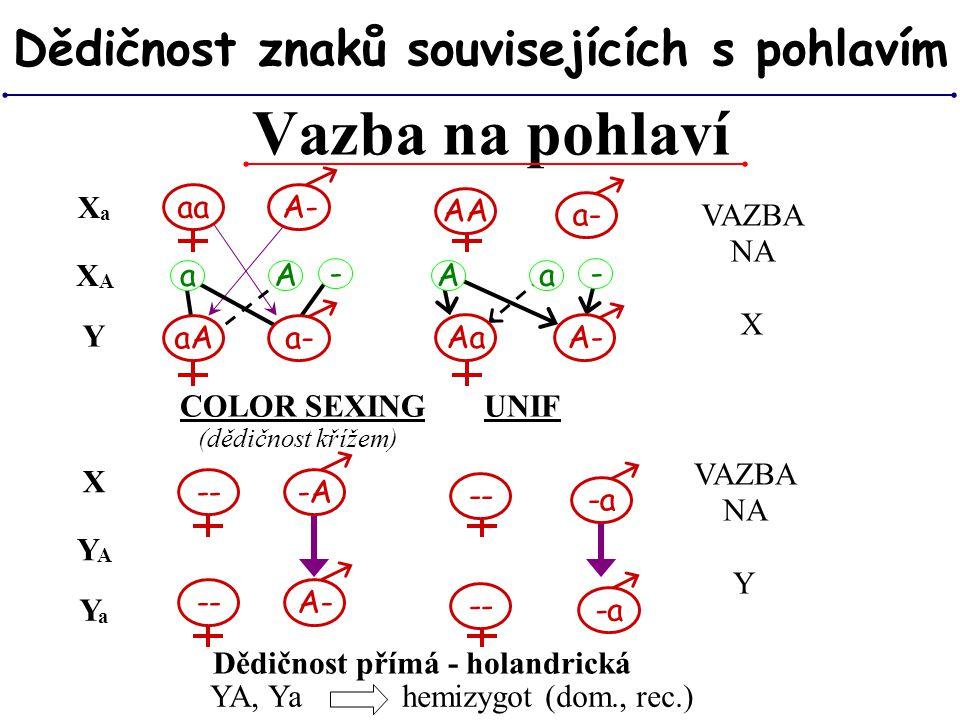 Vazba na pohlaví Dědičnost znaků souvisejících s pohlavím Y XAXA XaXa YaYa YAYA X COLOR SEXING UNIF (dědičnost křížem) Dědičnost přímá - holandrická Y