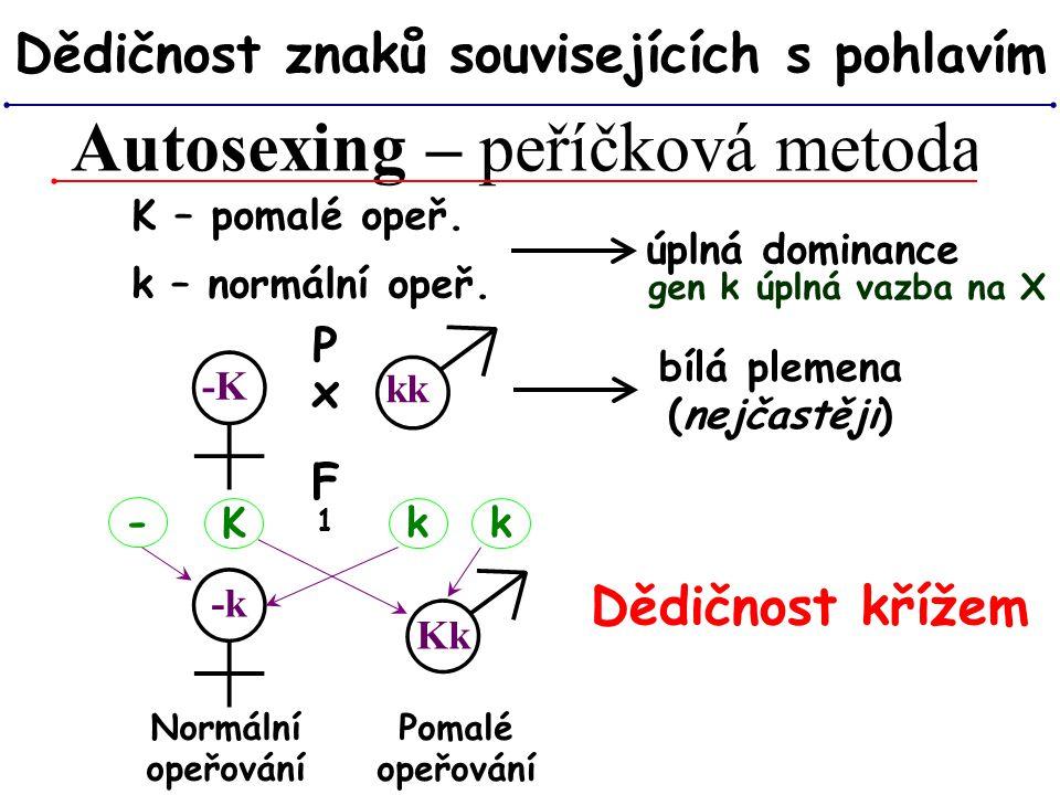 Autosexing – peříčková metoda Dědičnost znaků souvisejících s pohlavím bílá plemena (nejčastěji) K – pomalé opeř. úplná dominance k – normální opeř. ♂