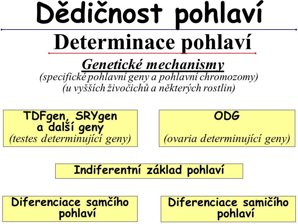 Determinace pohlaví Dědičnost pohlaví Genetické mechanismy (specifické pohlavní geny a pohlavní chromozomy) (u vyšších živočichů a některých rostlin)