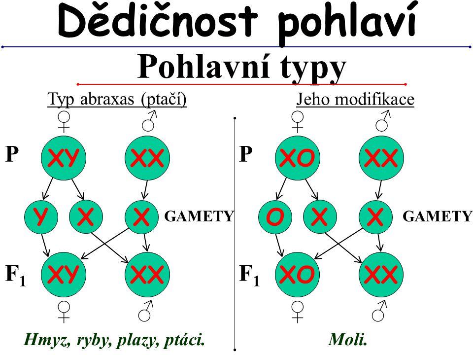Pohlavní typy Dědičnost pohlaví Typ abraxas (ptačí) XY XX Y GAMETY P X X XY XX Jeho modifikace F1F1 Hmyz, ryby, plazy, ptáci. XO XX O P X X XO XX F1F1