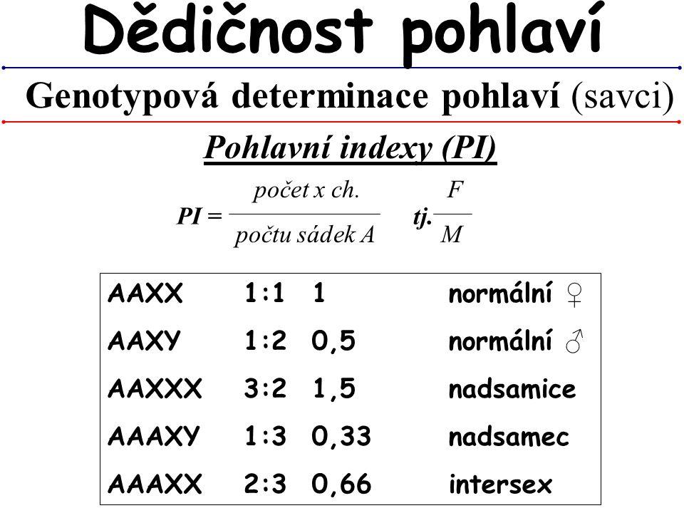 Genotypová determinace pohlaví (savci) Dědičnost pohlaví Pohlavní indexy (PI) počet x ch. F počtu sádek AM PI = tj. AAXX1:11normální ♀ AAXY1:20,5normá