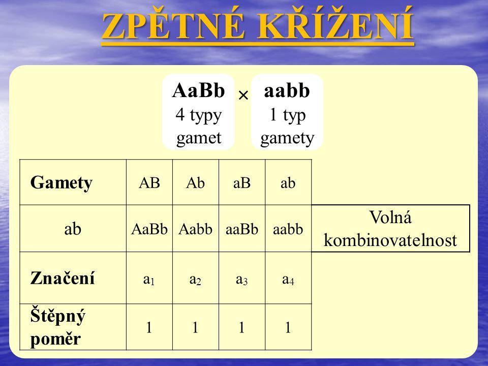 × AaBb 4 typy gamet ZPĚTNÉ KŘÍŽENÍ aabb 1 typ gamety Gamety ABAbaBab AaBbAabbaaBbaabb Volná kombinovatelnost Značení a1a1 a2a2 a3a3 a4a4 Štěpný poměr