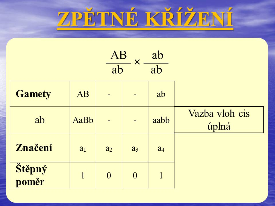 Ab ab aB ab ZPĚTNÉ KŘÍŽENÍ —— × —— Gamety -AbaB- ab -AabbaaBb- Vazba vloh trans úplná Značení a1a1 a2a2 a3a3 a4a4 Štěpný poměr 0110
