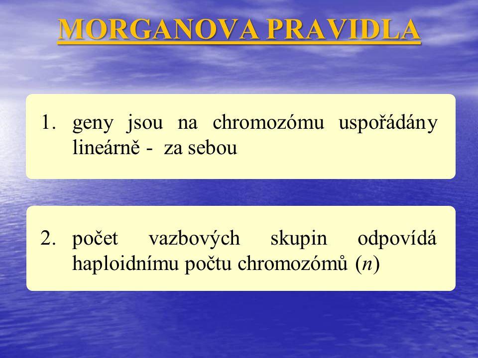 MORGANOVA PRAVIDLA 1.geny jsou na chromozómu uspořádány lineárně - za sebou 2.počet vazbových skupin odpovídá haploidnímu počtu chromozómů (n)