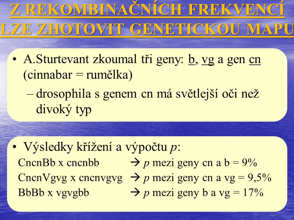 Z REKOMBINAČNÍCH FREKVENCÍ LZE ZHOTOVIT GENETICKOU MAPU A.Sturtevant zkoumal tři geny: b, vg a gen cn (cinnabar = rumělka) –drosophila s genem cn má s