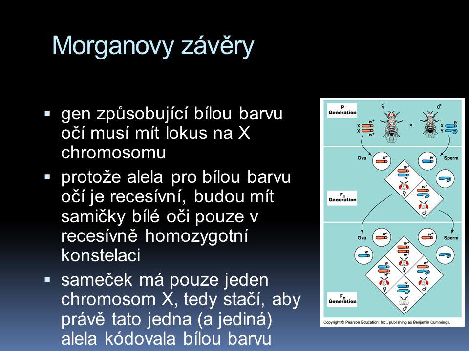 Dědičnost vázaná na pohlaví klasický Morganův pokus Drosophila má totéž chromosomální určení pohlaví jako člověk: XY … sameček XX … samička Na první p