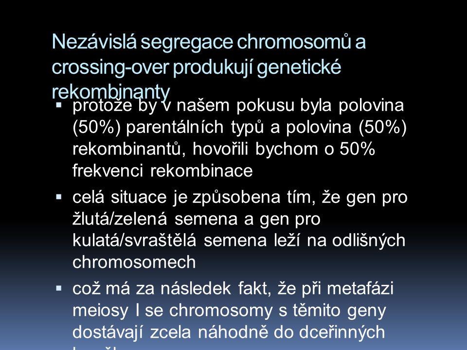 Nezávislá segregace chromosomů a crossing-over produkují genetické rekombinanty  kdybychom křížili v podobném pokusu, jaký učinil Morgan žlutý a kula