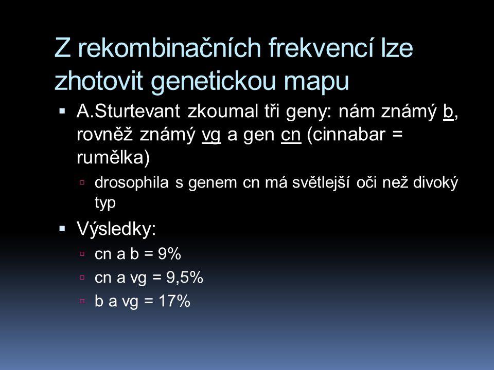 Z rekombinačních frekvencí lze zhotovit genetickou mapu  genetická mapa = lineární sekvence genů na chromosomu (Alfred Sturtevant)  Sturtevant si uv