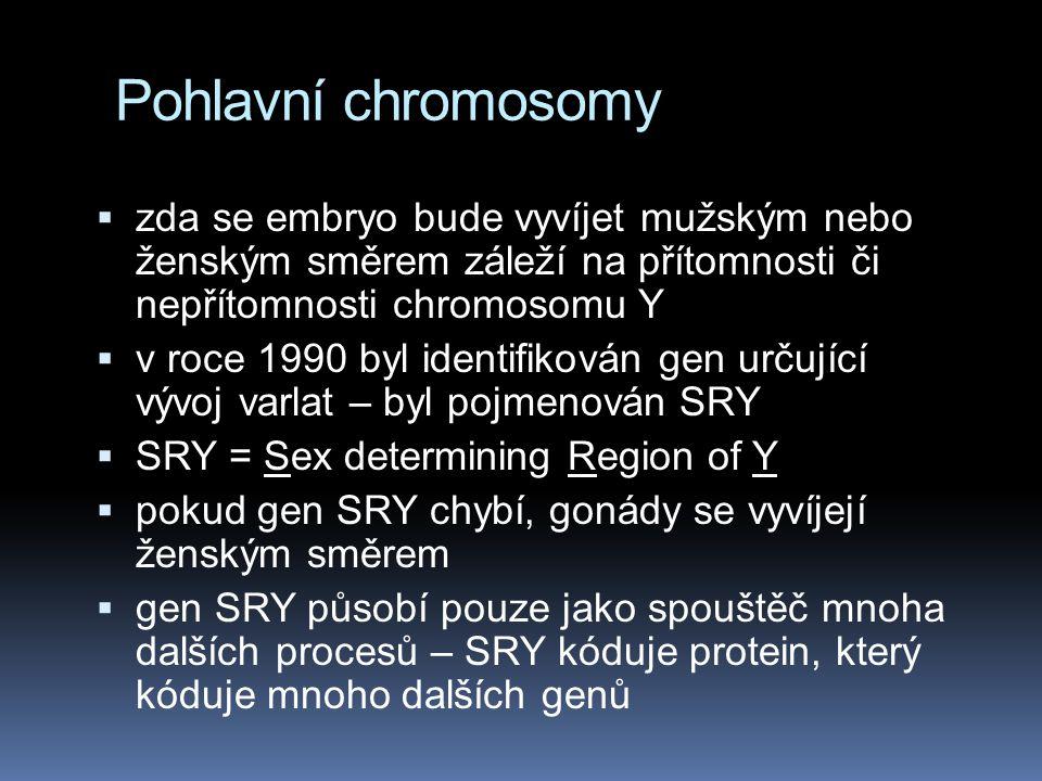 Pohlavní chromosom y člověka