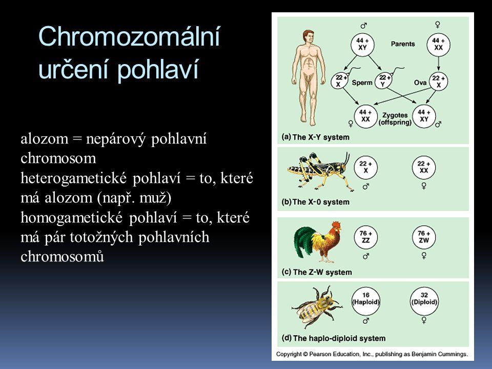 Pohlavní chromosomy  v současnosti byly identifikovány další geny na chromosomu Y, nutné pro normální vývoj muže  pokud jsou tyto geny poškozeny, na
