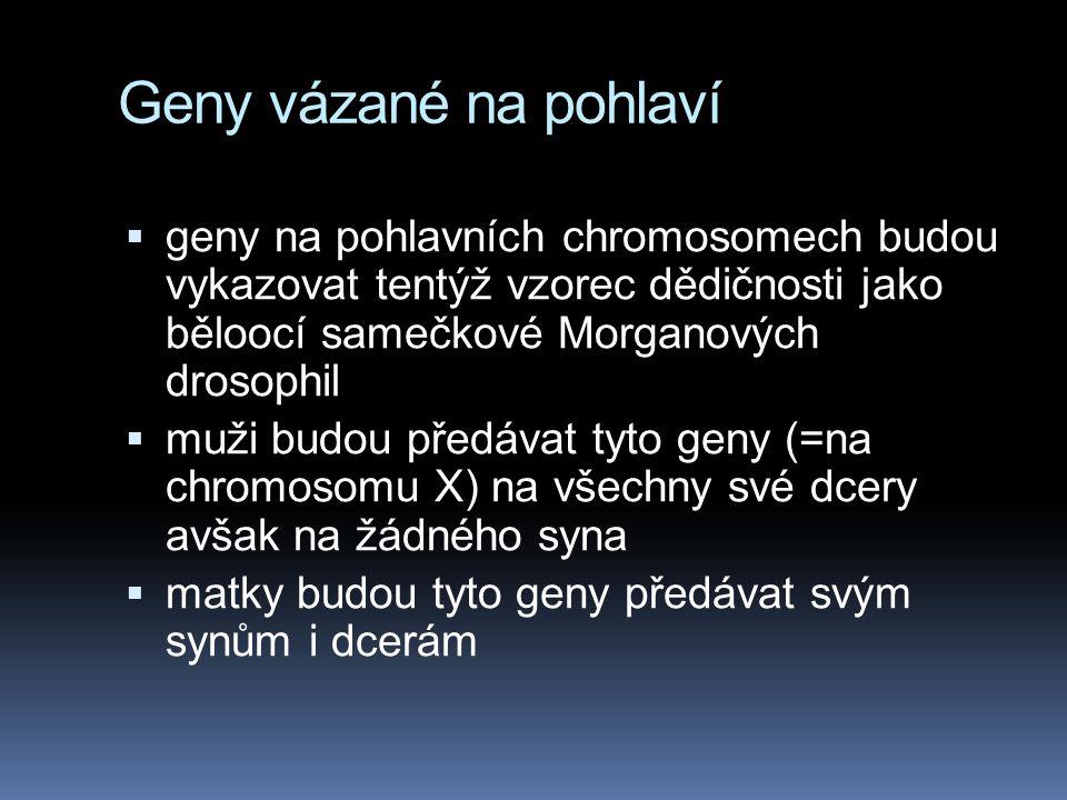 Chromozomální určení pohlaví alozom = nepárový pohlavní chromosom heterogametické pohlaví = to, které má alozom (např. muž) homogametické pohlaví = to