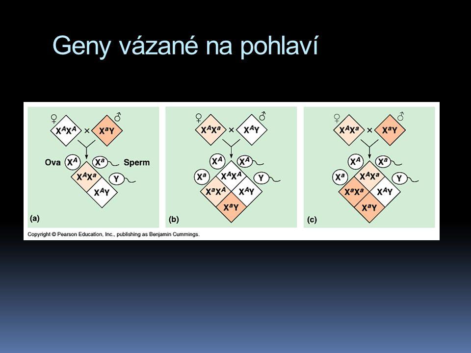 Geny vázané na pohlaví  geny na pohlavních chromosomech budou vykazovat tentýž vzorec dědičnosti jako běloocí samečkové Morganových drosophil  muži
