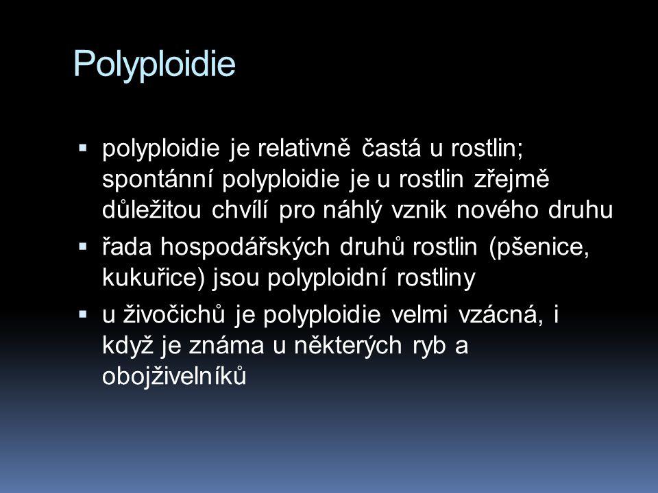 Aneuploidie a polyploidie  někdy může nastat podobná chyba i při mitóze. Pokud k nondisjunkci došlo v rané embryonální fázi, řada buněk organismu bud