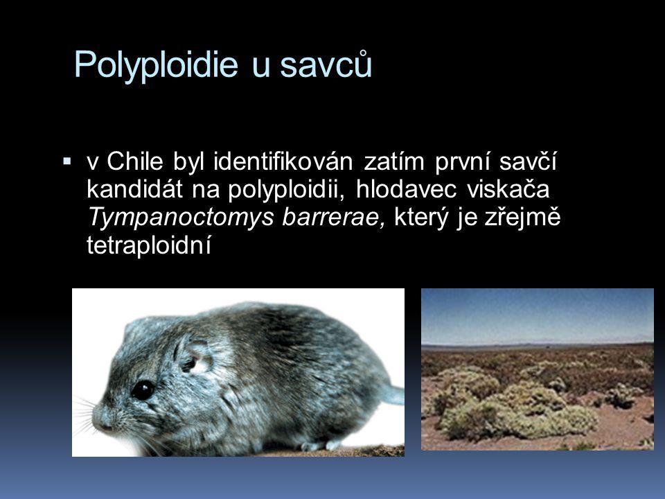 Polyploidie  polyploidie je relativně častá u rostlin; spontánní polyploidie je u rostlin zřejmě důležitou chvílí pro náhlý vznik nového druhu  řada