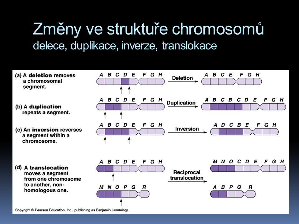 Změny ve struktuře chromosomů delece, duplikace, inverze, translokace  translokace – fragment je připojen k nehomologickému chromosomu  delece a dup