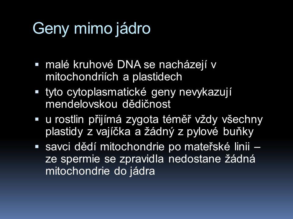 Syndrom fragilního X chromosomu  konec X chromosomu visí na tenkém vláknu DNA  chlapci 1:500  dívky 1:2 500  mentální retardace  velký počet repe