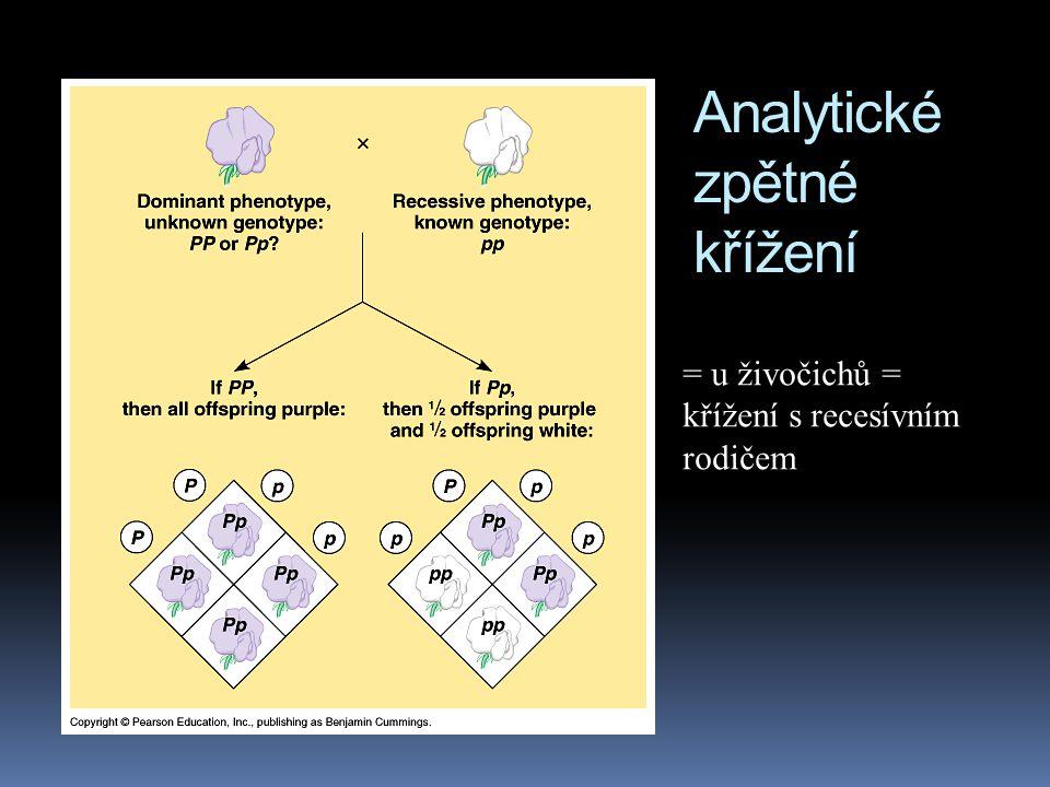 Analytické zpětné křížení (testcross)  pokud máme hrách s fialovými květy, nevíme, zda se jedná o homozygota (PP) nebo o heterozygota (Pp)  pomůžeme