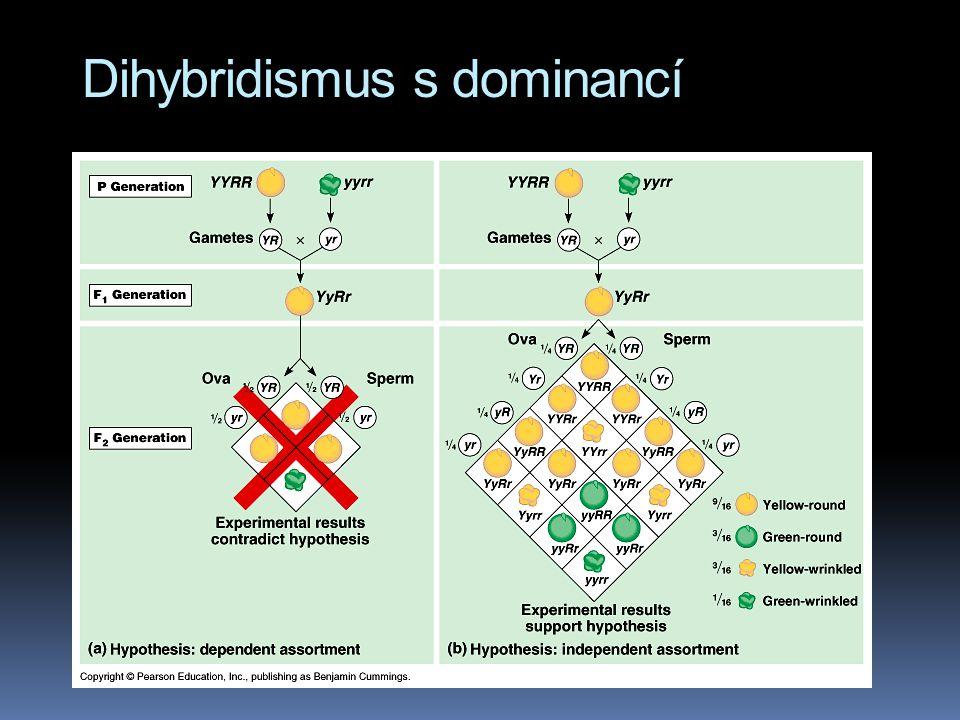 Dihybridismus s dominancí  Y - žlutá barva semen (yellow)  y - zelená barva semen  R - kulatá semena (round)  r - svraštělá semena  Fenotypový št