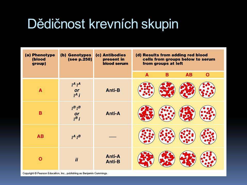 Dědičnost krevních skupin  Existují tedy 4 typy fenotypů, A,B,AB,O  protože každá osoba má dvě alely, je možných 6 genotypů (I A I A, I B I B,I A I